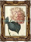 Old Fashioned PINK HYDRANGEA Botanical Illustration Antique Vintage ART PRINT