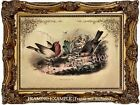 Antique Audobon BIRDS ROBINS NESTING Spring Natural History Vintage ART PRINT