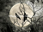 Three Crows on Branch against Moon Original Signed Handmade Matted Picture A268