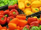 Peppers, Peppers, Peppers Matted Picture Art Print A444