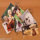 Pet photo on plastic card | with keyring | custom | quality printed both sides.