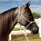 Glitter Rope Halter with 10' Lead - 9 colors available NEW