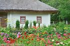 Complete Cottage garden flower seed mix 6  20 different flowers 10g to 3kg