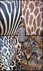 Light Switch Plate Outlet Covers~ FUN & COLORFUL ~ ANIMAL PRINTS 1