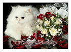 c057; Large Personalised Birthday card; Custom made for any name; White persian