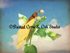 Orange Butterfly In the Clouds Original Signed Handmade Picture Photograph A208