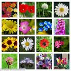 PWS Pure Meadow 100% wildflower seeds Bee Butterfly NO GRASS 112 10g to 20kg