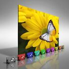 Butteryfly on Flowers Canvas Print Large Picture Wall Art