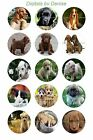 "PUPPY DOGS 1 "" CIRCLES  BOTTLE CAP IMAGES. $2.45-$5.50 *****FREE SHIPPING*****"