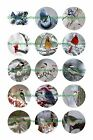 "BIRDS IN SNOW  1 "" CIRCLES  BOTTLE CAP IMAGES. $2.45-$5.50 ***FREE SHIPPING***"