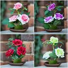 Set of 4 Artificial Small Table Rose Plant Flower Home Wedding Bridal Decor