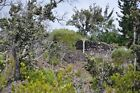 1 ACRE HAWAIIAN OCEAN VIEW LOT, BUILDABLE, CALIFORNIA SELLER, ON THE BIG ISLAND