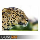 BIG CAT LEOPARD (3803) Animal Photo Picture Poster Print Art A0 A1 A2 A3 A4