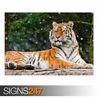ELENA SIBERIAN TIGRESS (3792) Animal Photo Picture Poster Print A0 A1 A2 A3 A4