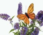 New Butterfly On Flowers Art Print Poster p0022