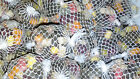 pre filled tied pellet MINI mesh balls spring  summer mix with glug & boilies