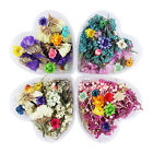 Nail Art Mixed Dried Flowers DIY Bottle Decor Preserved Flower Decoration Tools