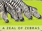A ZEAL OF ZEBRAS - ZEBRA ZOO SAFARI AFRICAN ANIMAL METAL PLAQUE TIN SIGN 438