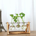 Crystal Glass Flower Pot Holders Garden Hydroponic Vases Terrarium Gift for Kids