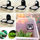 breed type - 4Type Reptiles Food Bowl Insect Breed Tank Dish Dispenser Wall Sucker Terrarium