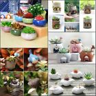 Внешний вид - Mini Ceramic Resin Succulent Plant Container Desktop Garden Flower Pot Planter