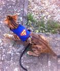 Mynwood Cat Walking Jacket Harness Vest Holster Superheros - MADE TO MEASURE