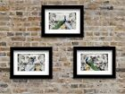 Set of 3 Fine Art Prints Blue Peacock White Peacock Bird Matted Picture USA A035