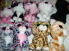 YOU PICK TY BEANIE BOOS CATS TABITHA SHADOW SOPHIE PEPPER SPECKLES MUFFIN 6'