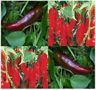 BIG JIM NUMEX MILD HOT Pepper seeds - 500-2.5K SHU ~ Growsto 10 inches - 75 DAYS