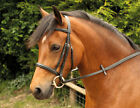 Windsor Equestrian Horses Cavesson Snaffle  Bridle