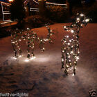 LARGE OUTDOOR LED VINE BERRY EFFECT REINDEER CHRISTMAS XMAS FIGURE LIGHT
