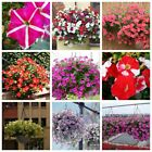 Flower seed - Variety color Semi-Trailing Petunia Splendid in hanging baskets