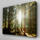 C367 Sunlight Entering Forest Canvas Wall Art Ready to Hang Picture Print