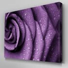 FL325 Purple Rose Floral Canvas Wall Art Multi Panel Split Picture Print