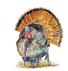 WILD TURKEY BIRD FOWL GAME HUNTING AUTO BOAT RV WINDOW DECAL GRAPHIC ART HD GIFT