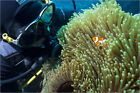 Poster / Leinwandbild Scuba diver with False clown anenomefish ... - L. Murray