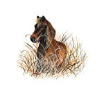 OUTER BANKS NC BANKER HORSE PONY WILD SEA GRASS OATS VINYL WINDOW WALL DECAL ART