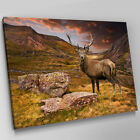 A363 Rocky Hillside Brown Stag Deer Canvas Wall Art Animal Picture Large Print