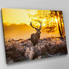 A372 Winter Sunrise Brown Stag Deer Canvas Wall Art Animal Picture Large Print