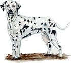 Dalmatian Dog Almost Alive Vinyl Decal Sticker - Auto Car Truck RV Cell Cup Boat