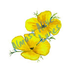 HD Vinyl Decal Sticker Yellow Poppy Flower for Auto Home Car Truck Boat RV Cup