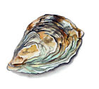 Oyster Shell Sticker Decal Home Office Dorm Wall Exclusive Art Tablet Cell CPU