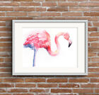 WILL ELLISTON Flamingo Bird Watercolour PRINT of original painting artist signed