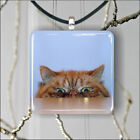 CAT CURIOUS FUNNY PENDANT NECKLACE 3 SIZES CHOICE -sfe4Z