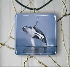 SEA LIFE HUMPBACK WHALE JUMPING PENDANT NECKLACE 3 SIZES CHOICE -ase3Z