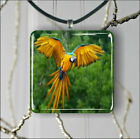 BIRD PARROT FLYING IN JUNGLE PENDANT NECKLACE 3 SIZES CHOICE -upo9Z