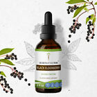 Black Elderberry Tincture Alcohol Extract Health of the Respiratory System