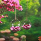 Hanging Plant Flower Clear Glass Ball Vase Fish Tank Terrarium Container Decor