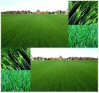Kentucky Bluegrass Seed - Lawn Grass Seeds - COOL SEASON GRASS