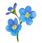 Forget Me Not Flower Printed Vinyl Decal Car Wall Window Sticker